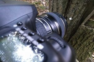 Camera pointing at a dead woodlouse