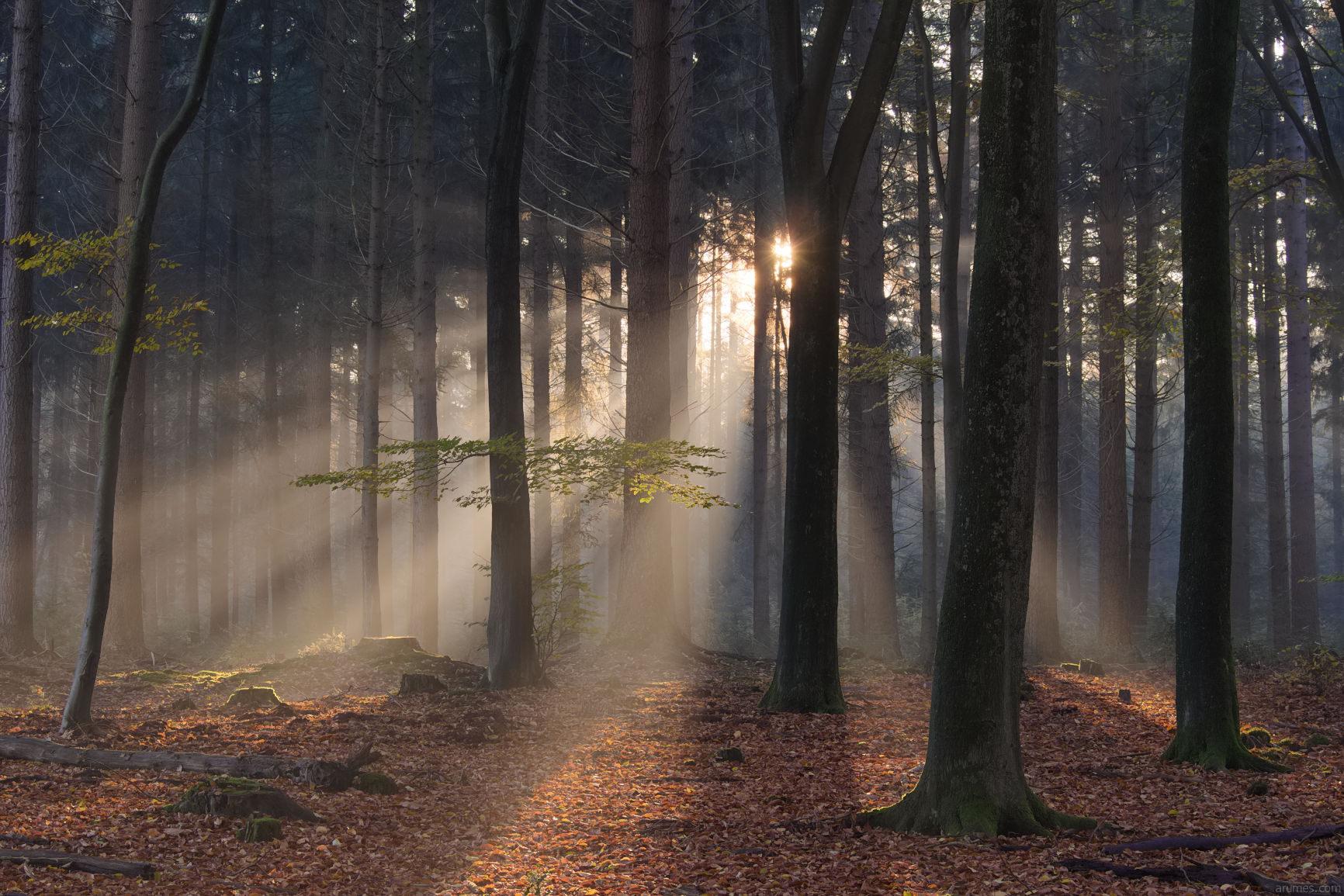 autumn mixed woods with sunrise rays in haze