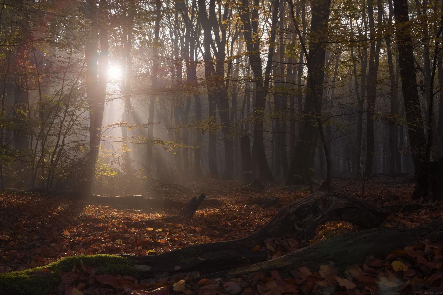 autumn deciduous woods with sunrise rays in haze
