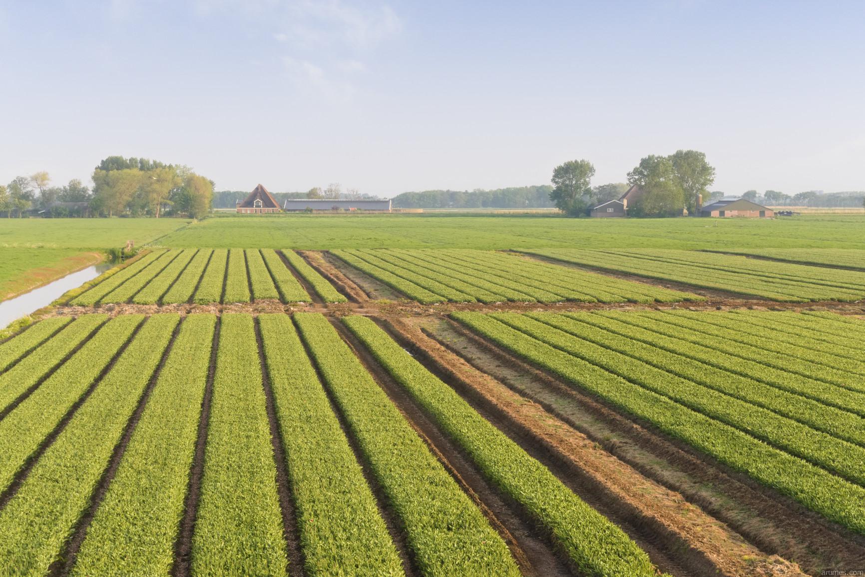 Dutch flat farmland with farms in background